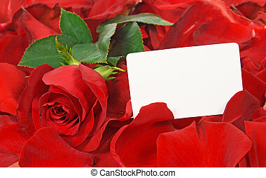 Cardboard and red rose in petals isolated on white