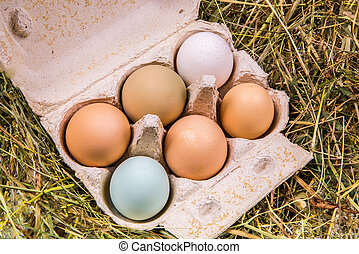 cardboard box with eggs in different colors and sizes -...