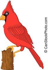 cardeal, árvore, vermelho, sentando