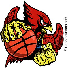 cardinal basketball - muscular cardinal basketball player...
