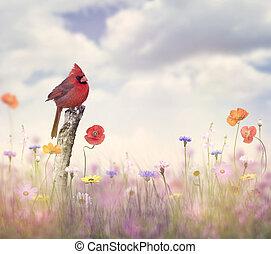 Cardinal bird in a flower field