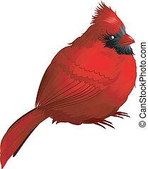 Cardinal bird isolated on white. EPS 8, AI, JPEG