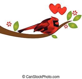 Cardinal bird on branch tree