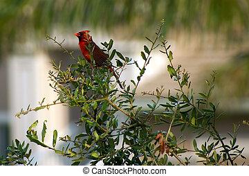 cardinal bird sitting on small tree