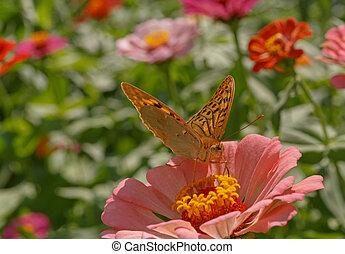 butterfly on flower in garden