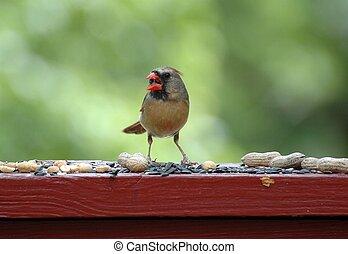 Cardinal Feeding 2