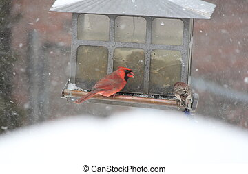 Cardinal & Finch on Feeder