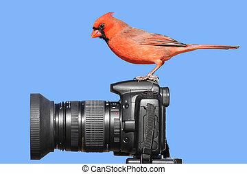Cardinal On A Camera