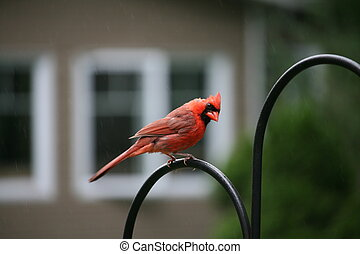cardinal perched on top of iron 3