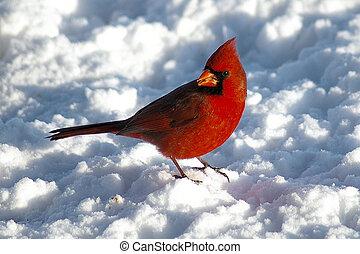 reb bird on a snowy day