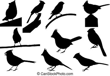 Cardinal Silhouette vector illustration