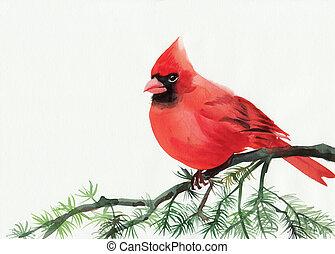 Cardinal - Watercolor painting of cardinal bird sitting on a...