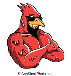 cardinale, uccello, mascotte