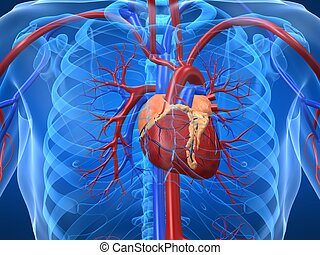 3d rendered illustration of human chest with heart
