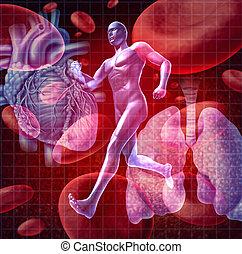 Cardiovascular System - Cardiovascular system as a health ...