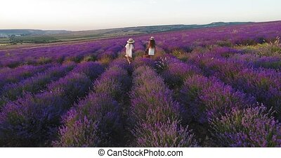 Carefree girls go on a picnic in the field of lavender. Aerial shoot