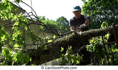 Careful woodcutter cutting tree trunk felled on park fence.