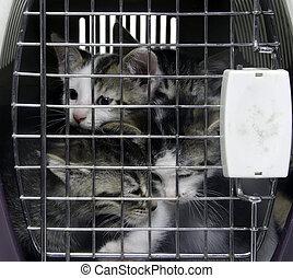 caresser transporteur, chatons