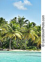 caribbean , ακτογραμμή