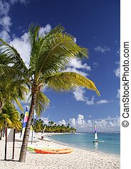 caribbean arenano