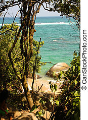 Caribbean beach and tropical forest