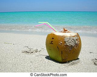 Caribbean beach coconut