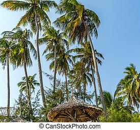 Caribbean beach Coconut palm trees resort