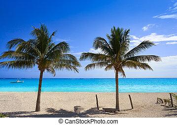 Caribbean beach coconut palm trees Riviera Maya