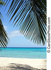 Caribbean Beach with palm trees, Dominican Republic, West Indies, Caribbean