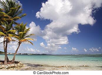 Palms at a beautiful caribbean beach