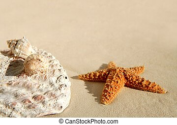 Caribbean beach sand, sea shells and starfish
