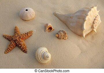 Caribbean beach sand with sea shells and starfish, texture