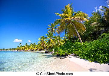 Caribbean beach - Caribbean sand beach with palm trees in...