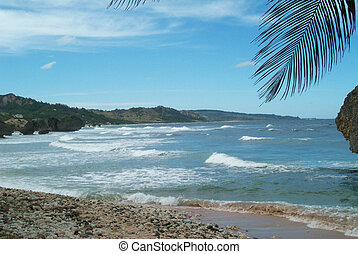 Caribbean beach - View of a beach in Martinique in the ...