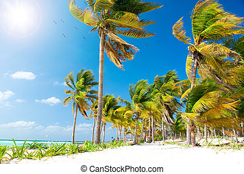 Caribbean Beach. White Sand and Palms