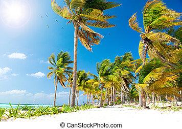 Caribbean Beach. White Sand and Palms