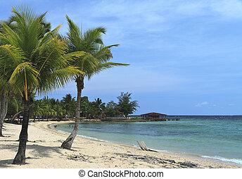 Caribbean beach with coconut palms