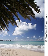caribbean encalham