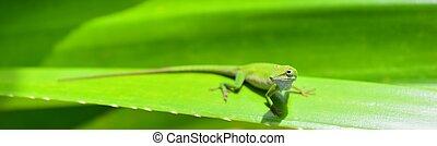Caribbean Green Anole (Anolis Carolinensis) Lizard on the...