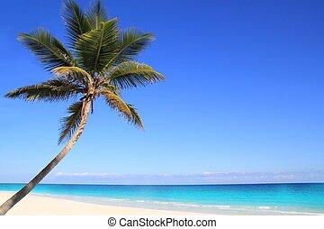 caribbean, kókuszdió pálma, bitófák, alatt, tuquoise, tenger