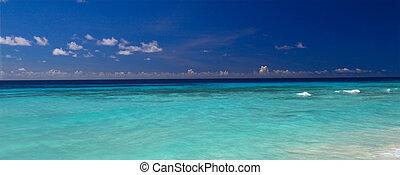 caribbean, kilátás, alapján, növény faj