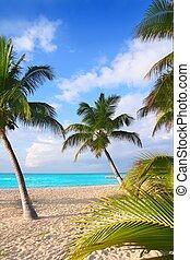 Caribbean North beach palm trees Isla Mujeres Mexico -...