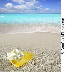 Caribbean pearl on shell white sand beach tropical