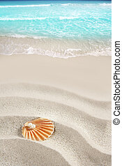 Caribbean pearl on shell white sand beach tropical