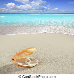 Caribbean pearl on shell white sand beach tropical -...