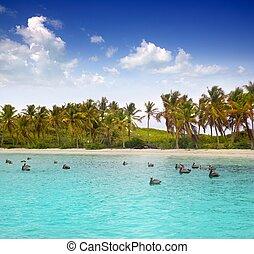 Caribbean pelican turquoise beach tropical sea view Mexico