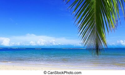 Caribbean sea and palm leaves .