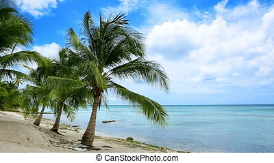 Caribbean sea and palms.