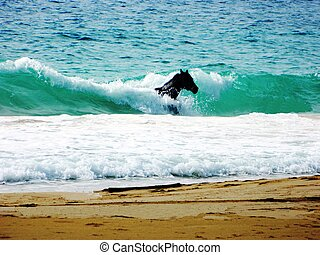 Caribbean Sea Horse II - This is a photo of a horse swimming...