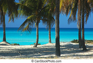 Caribbean Sea - Palm trees at a Caribbean Beach